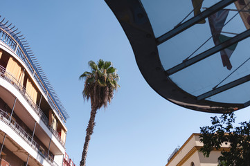 Palm tree in the city