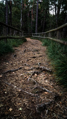 Wanderweg im Teutoburger Wald