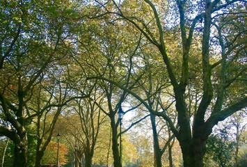 Trees Park