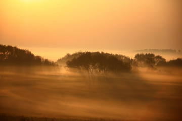 Bushes in the foggy morning./Wild-growing bushes among the exfoliating fog in beams of a rising sun. Fantastic picture.