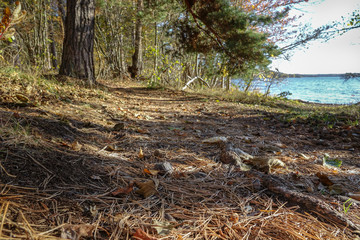 Path in the woods covered by pine needles. Archipelago landscape. Sweden