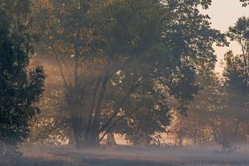 Obraz Jesienny świt nad wiejskimi łąkami. - fototapety do salonu