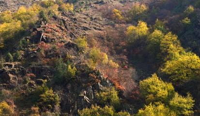 landscape in autumn