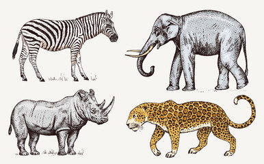 Set of African animals. Rhinoceros Elephant Leopard. Engraved hand drawn Vintage old monochrome safari sketch. Vector illustration.