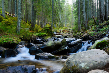 Mountain stream in Carpathian Mountains. Around the tall trees, stones and splashes of water.