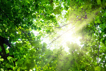 Background of green summer foliage in the sun. Desktop Wallpapers