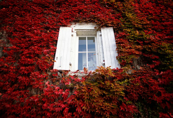 A house covered with Virginia creeper is pictured on an autumn day in Chateau-Thebaud