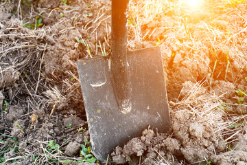 Digging, black shovel on the ground, agriculture