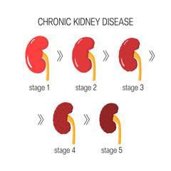 Chronic kidney disease vector