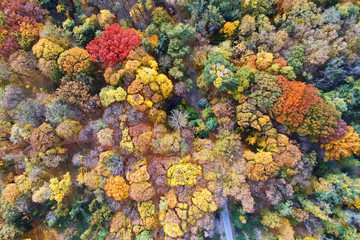 Autumn forest aerial view. Multicolored fall trees in city park. Beautiful colorful seasonal foliage