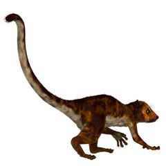 Darwinius Primate Tail