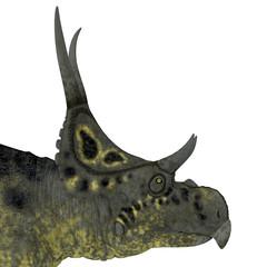 Diabloceratops Dinosaur Head