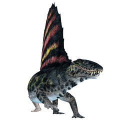 Dimetrodon Reptile on White