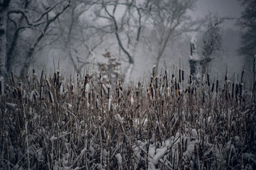 A mass of snow covered cat tails covered in snow during a snow storm in front of bare snow covered trees