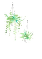 観葉植物、2種類