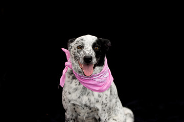 Happy  dog in a pink bandana