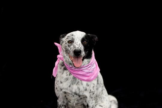 Happy  dog in a pink bandana