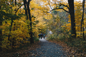 A walk in an autumn forest. Mount-Royal Park in Montreal during the Fall season.