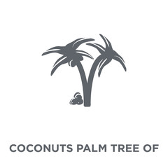 Coconuts palm tree of Brazil icon from Brazilian icons collection.