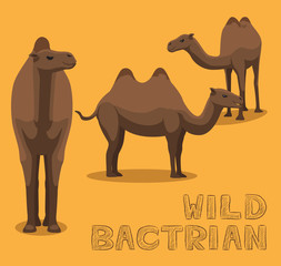 Camel Wild Bactrian Cartoon Vector Illustration