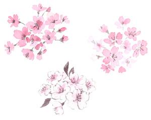桜 水墨画セット