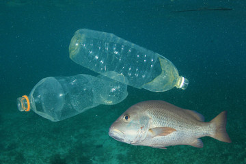 Plastic bottles pollution in sea and fish