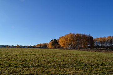 Beautiful autumn landscape. Green meadow grass and blue cloudless sky.