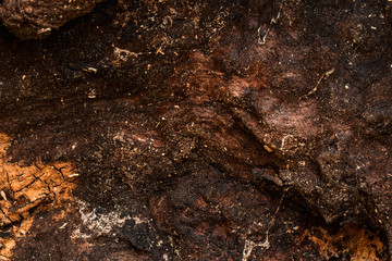 old wood texture closeup dark and brown brightly illuminated by sunlight natural background
