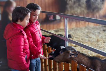 Children, feeding goats on a farm, kids and animal interaction