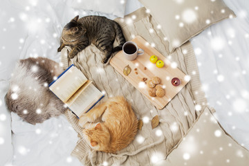 Fototapete - pets, hygge and winter concept - two cats lying on bed with book, lemon tea and oatmeal cookies at home over snow