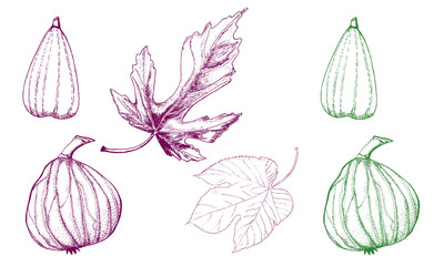 Figs. Set of tropical fruits. tartar. scketch. Illustration.