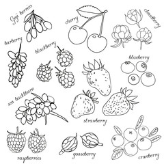 Set of hand drawn sketch style berries