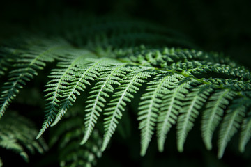 Closeup fern leaf on the black background