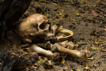 Skull and bones digged  in the  pit  with old timbers, Concept halloween day, still life style.