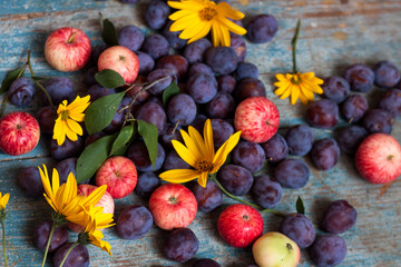 Plum, yellow flowers and apples on blue wooden background.