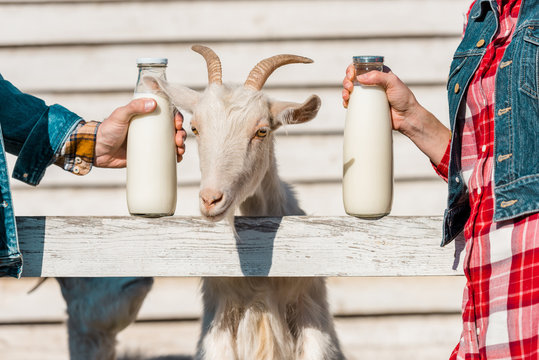 cropped image of farmers showing glass bottles of milk while goat standing near wooden fence at farm