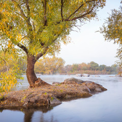 river coat with alone tree in foggy morning and blurred river in Ukraine