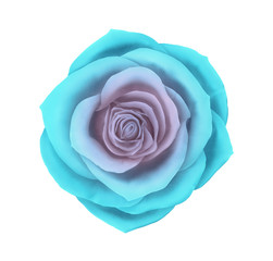 Vector beautiful blue rose floral decorative element. Photo realistic flower icon isolated on white background