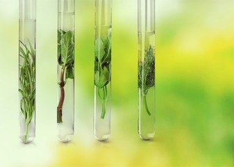 Herbal in test tubes on background.