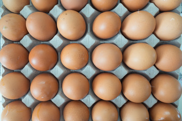 Brown chicken eggs in egg tray packaging