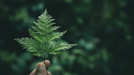 green fern leaves in a human hand. - dark tone background .