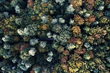 Autumn forest aerial drone view from above, dji
