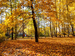 Golden autumn forest trees view