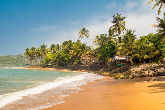 Paradise Mirissa beach in Sri Lanka. Yellow sand and palm trees with blue sky.