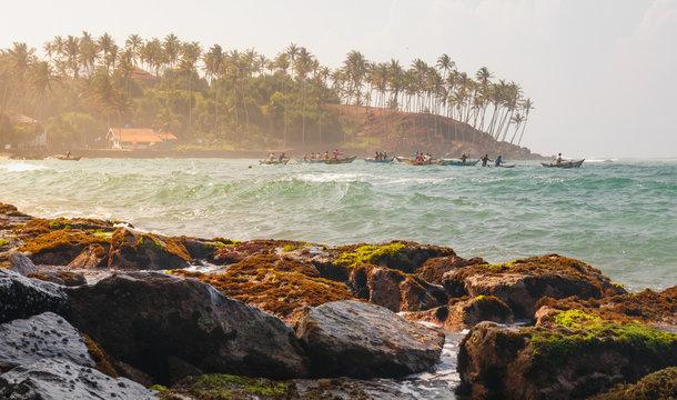 Coconut palm and sun lights through trees on beach with fishermen , Mirissa, Sri Lanka
