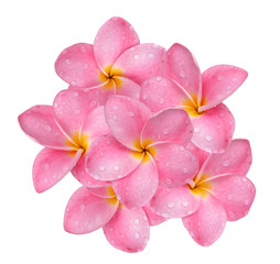 frangipani flower with drops of water isolated on white background.