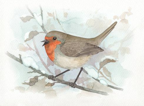 European robin winter bird watercolor