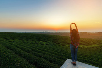 Lifestyle traveler women happy feeling good relax and freedom facing on the natural tea farm in the sunrise morning, Thailand. Travel Concept Wall mural