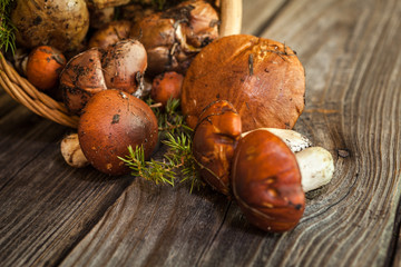 Forest picking mushrooms in a basket. Fresh raw mushrooms on wooden table