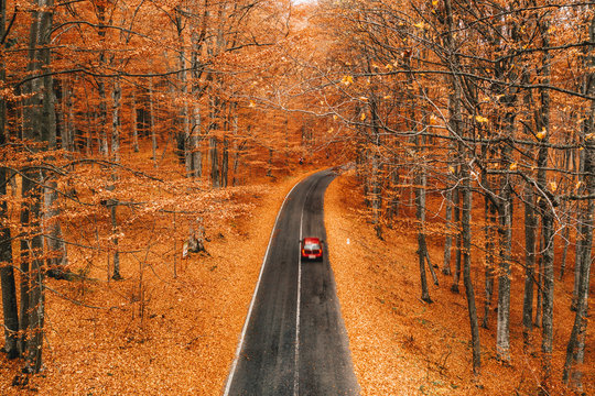 Fall autumn forest road in the middle of the forest with car passing by